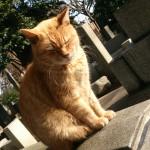 谷中墓地の猫さんたち