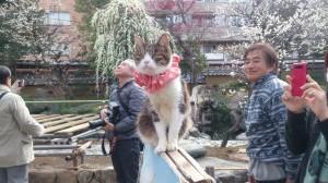 湯島天神の猫さん
