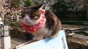 湯島天神の猫さん4