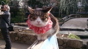 湯島天神の猫さん2
