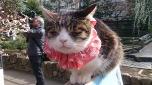 湯島天神の猫さん3