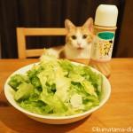 ゴマドレッシングが大好きで、レタスに反応する猫