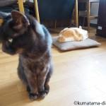 猫の対照的な性格