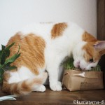 無印良品の「猫草栽培セット」で毛玉対策