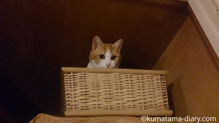 天袋のかごの中の猫