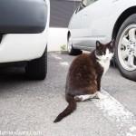 神楽坂の猫