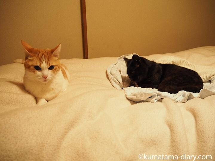 布団乾燥機と猫