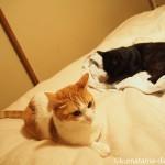 布団乾燥機でぬくぬくする猫たち