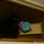 猫とバスタオルの不思議
