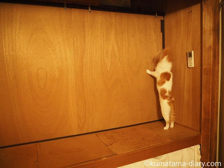 伸び上がる猫