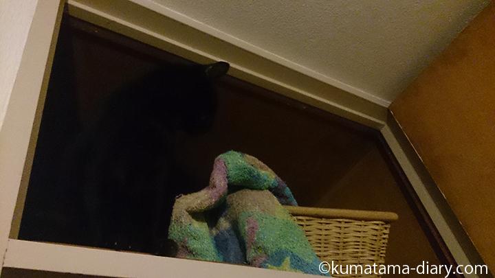 バスタオルを引っ張りだした猫