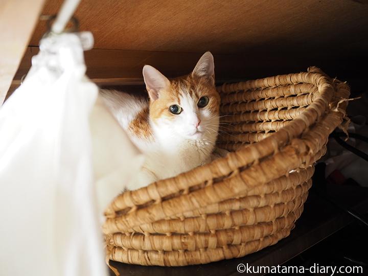 押し入れのかごの中の猫
