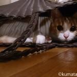 猫は狭いところが好き