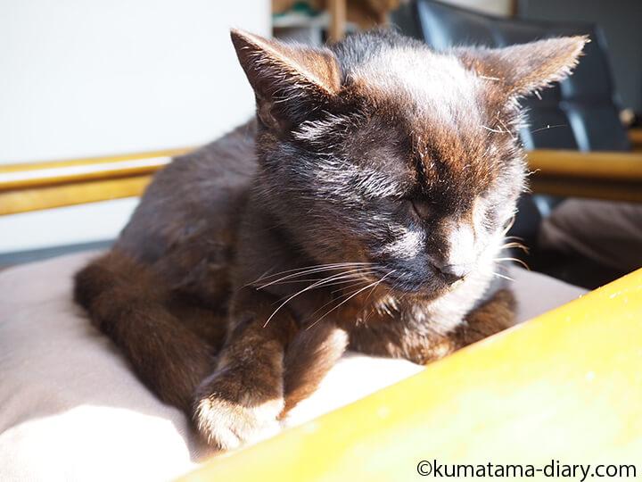 掃除中に寝る猫