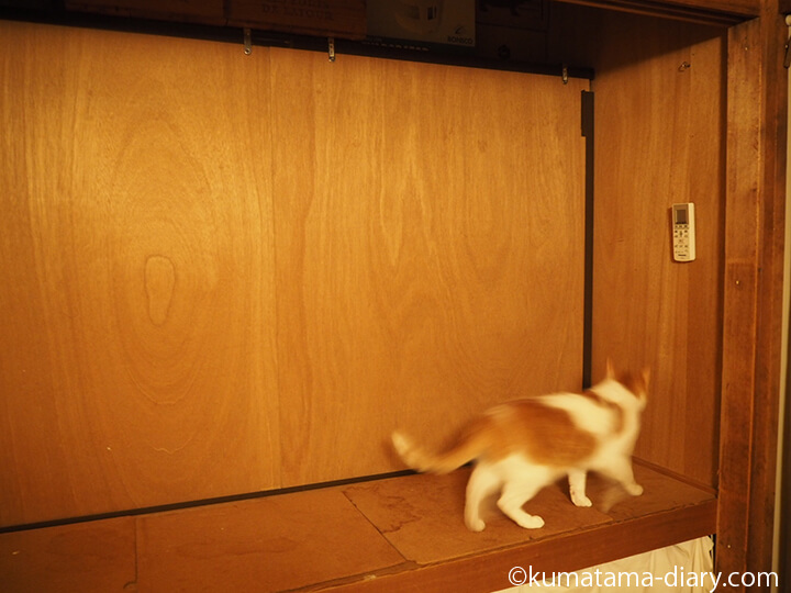 押入れと猫