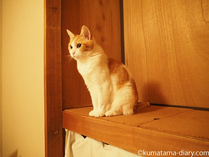 押入れ前の猫