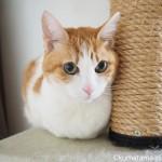 香箱を組む猫