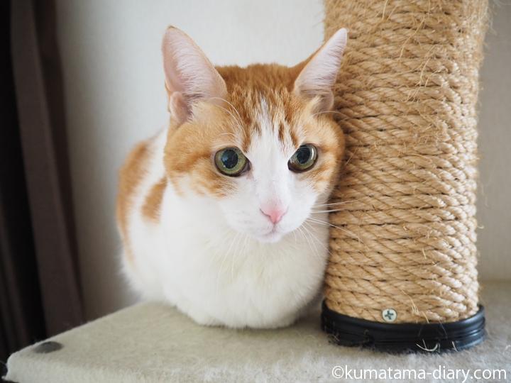 箱座りの猫