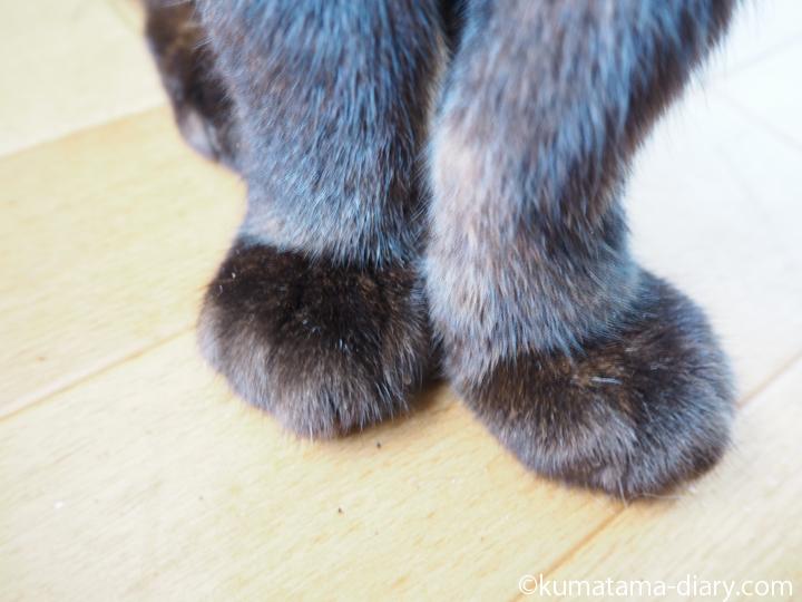 黒猫の前足