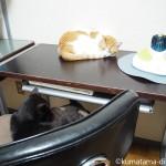 パソコン作業を見守る猫