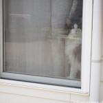 【入間市】ジョンソンタウンの猫