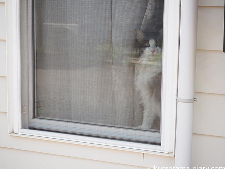 ジョンソンタウンの猫