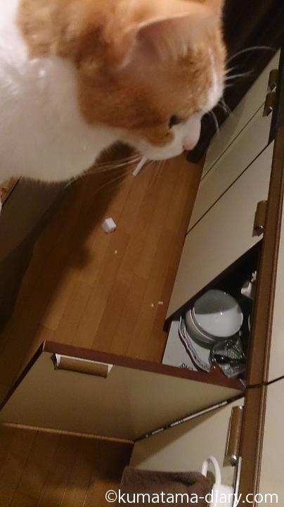 メラミンスポンジで遊んだ猫