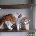 スリッパの上に吐く猫