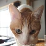 洗面所での猫の粗相をアルミホイルで治しました