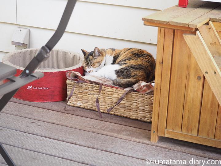 ジョンソンタウンの三毛猫