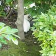 九品仏浄真寺の猫