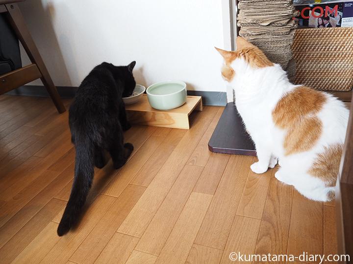 エサを食べ終わるのを待つ猫