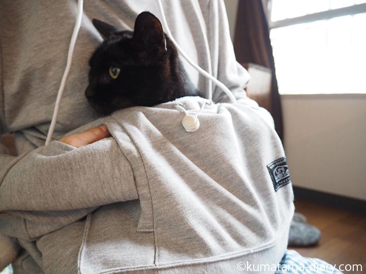 ポケットでおとなしい猫