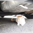 駐車場にいた飼い猫