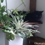 猫がいても安心な人工観葉植物
