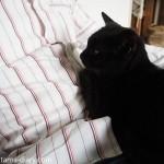 猫が膝の上に乗ったら、自主的に動くまでどかさないルール