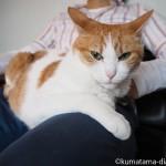 猫と彼の複雑な関係