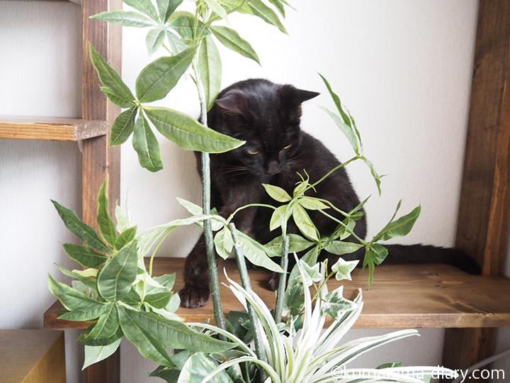 隠れたつもりの黒猫