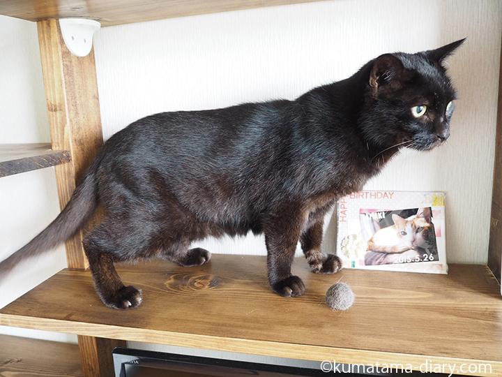 黒猫と毛玉ボール