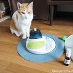 猫がよろこぶキャットニップ