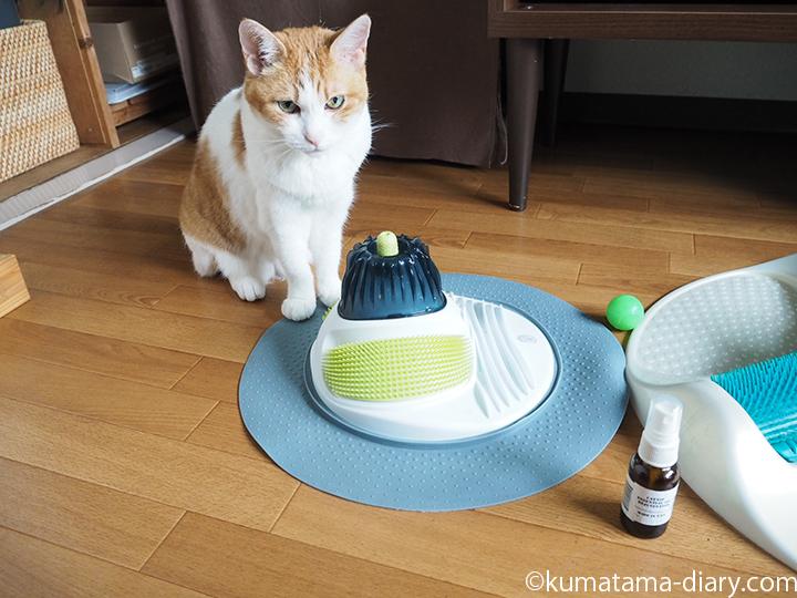 キャットスパと猫