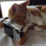 OLYMPUSのミラーレス一眼カメラ「PEN LITE7(E-PL7)」を枕にして寝る猫