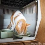 キャリーケースの中でエサを食べる猫