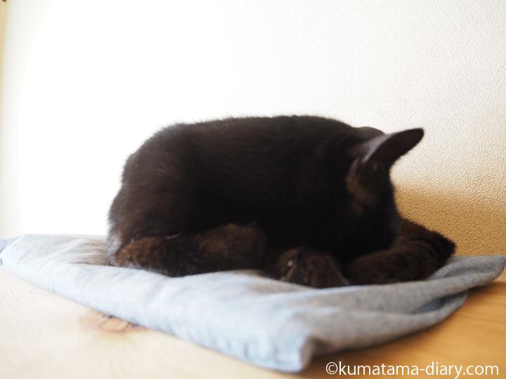 クールアルミジェルマットで寝る猫