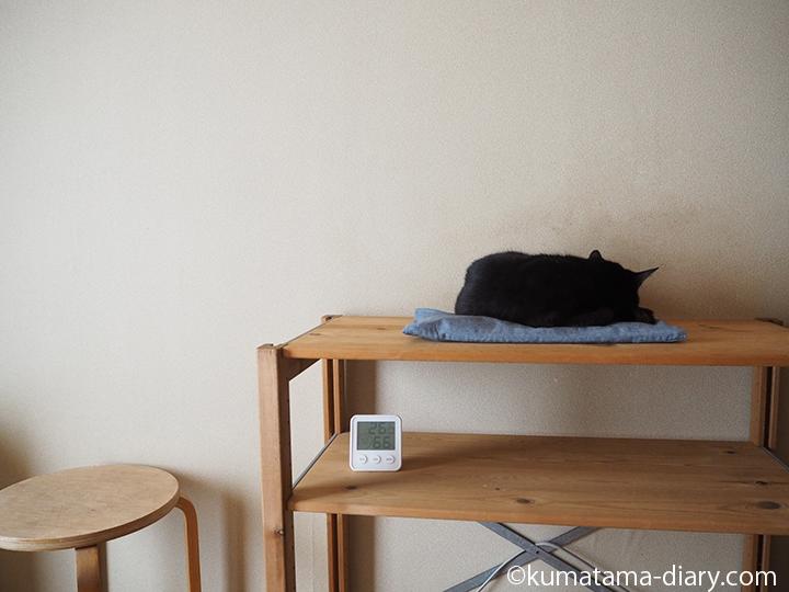 寝室で寝る猫