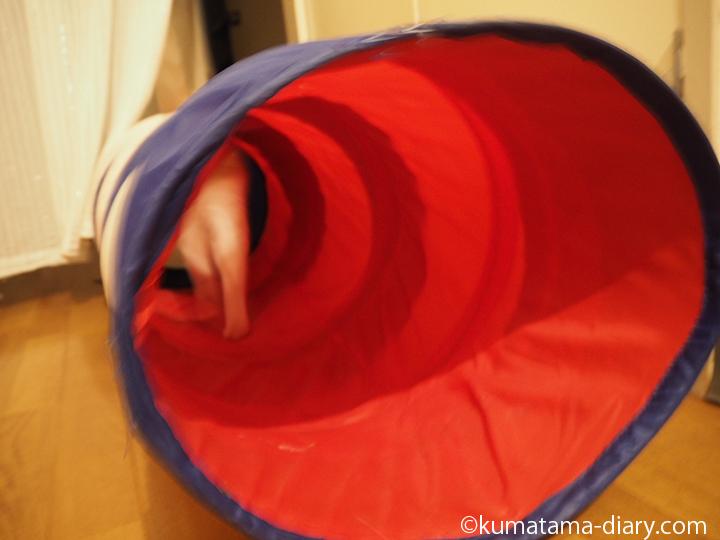 トンネルを通る猫