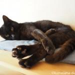 黒猫の肉球は小豆色、茶トラ白猫の肉球はピンク色♪