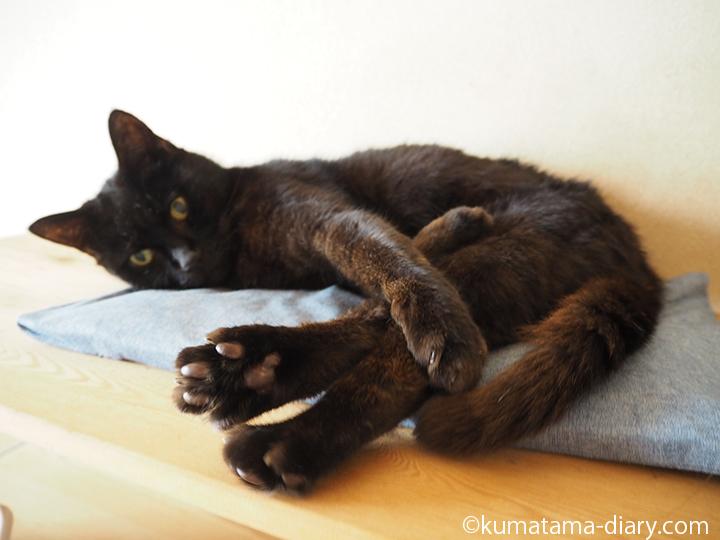 目覚めた黒猫