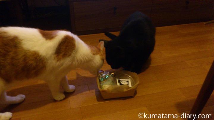 猫用ディナーをプレゼント