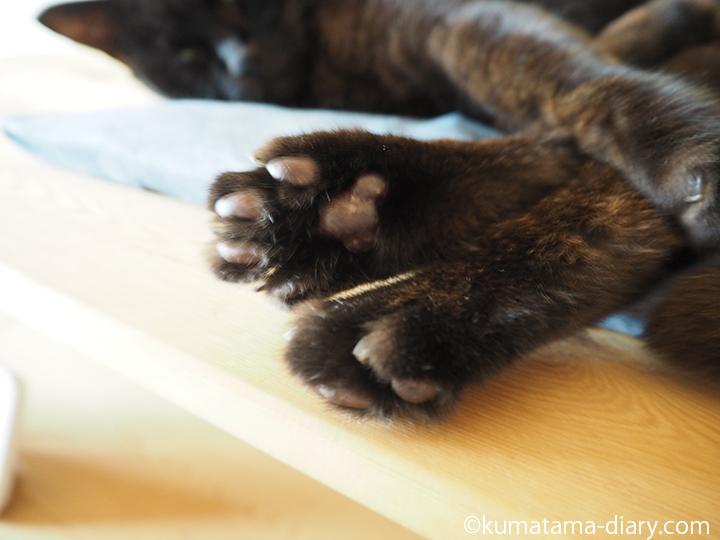 黒猫の肉球